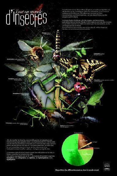 Dossier pédagogique de l'exposition « Insectes… Hommes et biodiversité » | Insect Archive | Scoop.it