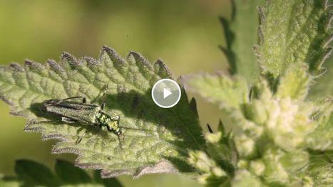 SuperNaturel : Mai | Biodiversité | Scoop.it