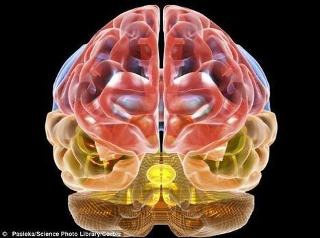 Psiconeuroinmunología: Lo que el corazón quiere, la mente se lo muestra -- Sott.net   Coaching Familar, Personal y Vocacional - Whanau Coaching-   Scoop.it