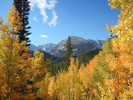 North American forests unlikely to save us from climate change, study finds - Scienmag | MycorWeb Plant-Microbe Interactions | Scoop.it