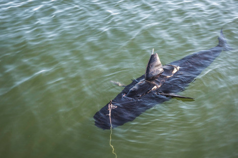 The Navy's New Robot Looks and Swims Just Like a Shark | WIRED | Technoculous | Scoop.it