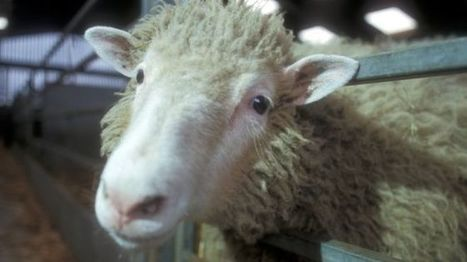 Roslin mention: Dolly the sheep to get blue plaque in Edinburgh | BIOSCIENCE NEWS | Scoop.it