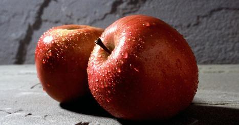 Apple Starts Crawling Web - Is Apple Launching a Search Engine in 2015? - Search Engine Journal | Référencement sur les moteurs de recherche (SEO) : Google, Yahoo, Bing... | Scoop.it