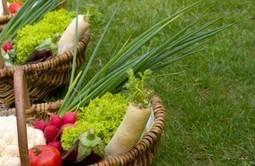 España es el primer productor de agricultura ecológica   Agricultura ecológica y tintes naturales   Scoop.it