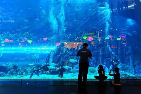 Scuba diving... In a mall! Dubai. | Scuba Diving Adventures | Scoop.it