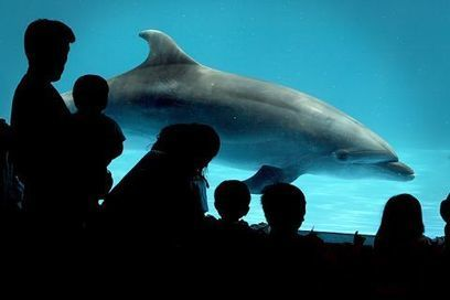 Aquariums Deal Big Blow to Dolphin Slaughter in Taiji | Nature Animals humankind | Scoop.it