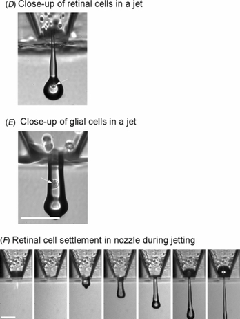 Adult rat retinal ganglion cells and glia can be printed by piezoelectric inkjet printing - IOPscience   3D Printing tools for science   Scoop.it