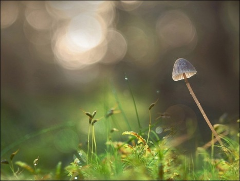 How Magic Mushrooms Really 'Expand the Mind' | Erba Volant - Applied Plant Science | Scoop.it