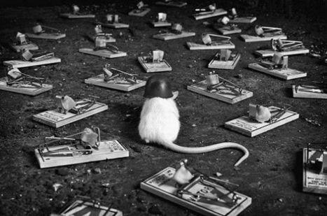 KOKOPELLI condamnée: biodiversité, la fin des illusions | Abeilles, intoxications et informations | Scoop.it