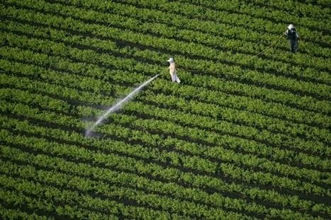 46 % des aliments en Europe contiennent des pesticides | Chimie verte et agroécologie | Scoop.it