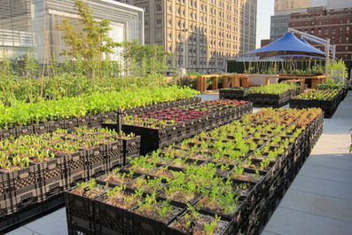 An Empty Lot Becomes a Riverpark Farm in NYC - Core77 | Vertical Farm - Food Factory | Scoop.it