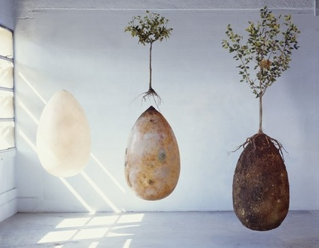 Organic burial pods to replace tombstones with trees | Xposed | Scoop.it