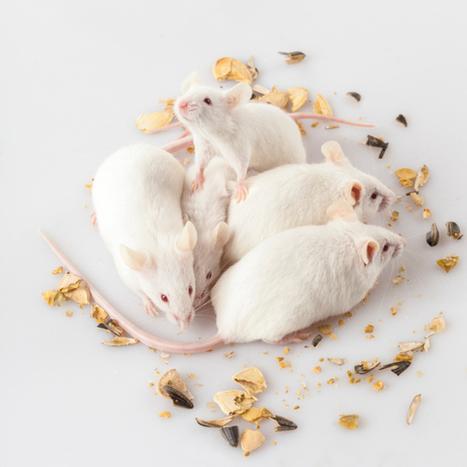 Depressed Mice Have Excitable Neurons | Social Neuroscience Advances | Scoop.it