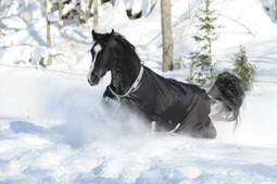 Understanding Blanket Terminology & Picking One To Suit Your Needs | T.A.C.K. Culture | Horse and Rider Awareness | Scoop.it