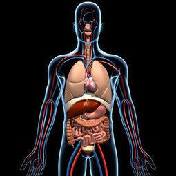 Anatomía Humana - Alianza Superior   Anatomía Humana   Scoop.it