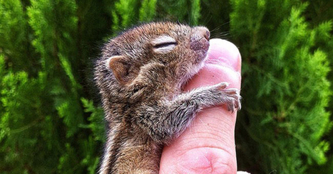 27 Impossibly Tiny Animals That Will Make Your Head Explode | Random stuff (music&books&other) | Scoop.it