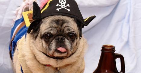 12 Pug Tips for a Stellar Halloween | Pugs | Scoop.it