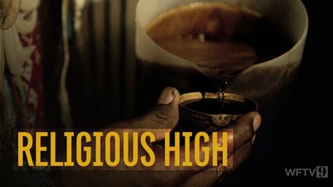 9 Investigates hallucinogenic drug used in local church   ayahuasca   Scoop.it