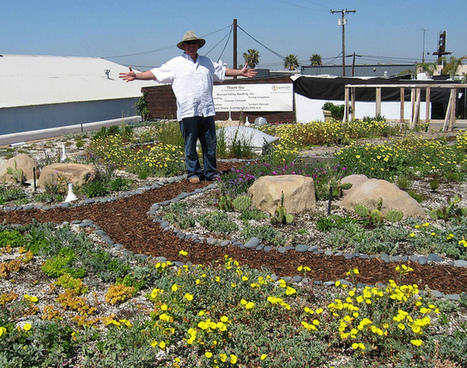 Raising the green roof in America | Farming, Forests, Water & Fishing (No Petroleum Added) | Scoop.it