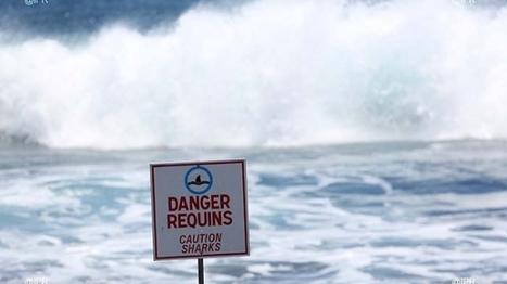 Augmentation du nombre de requins : la préfecture appelle à plus de vigilance   Actualités Réunion 974   Scoop.it