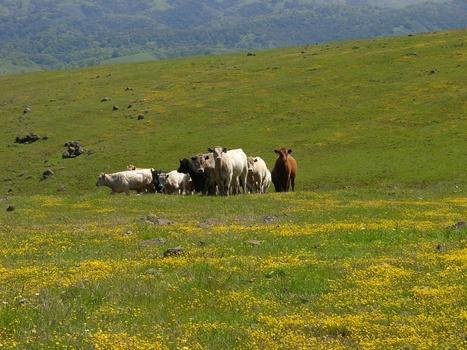 Pro: Public Lands Need Cattle to Meet Conservation Goals - | GarryRogers Biosphere News | Scoop.it