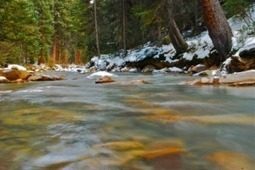 Colorado: Drought relief for streams and fish? - Summit County Citizens Voice | Fish Habitat | Scoop.it