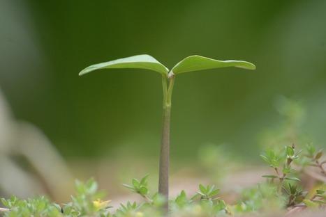 Plants Are Smarter than You Think | Nos Idées ont du Futur | Scoop.it