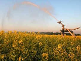 Factbox: GM foods in Australia | Genetically Modified Food | Scoop.it
