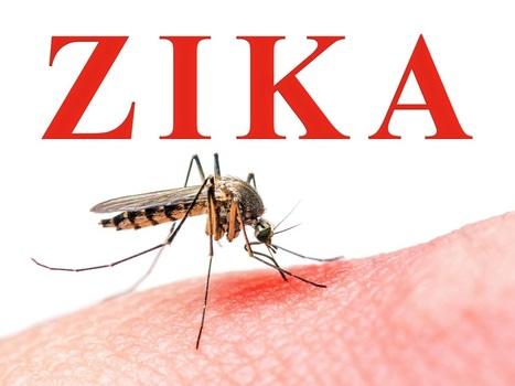 Zika: le premieressai clinique de vaccin sur le point de débuterau Canada | EntomoNews | Scoop.it