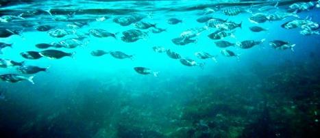Journée Mondiale de l'Océan le 8 juin à l'UNESCO | Carnets de plongée | Scoop.it