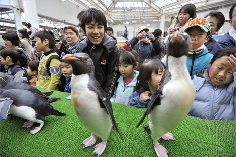 [Eng] Miyagi : Un aquarium et un zoo rouvrent après les désastres | The Japan Times Online | Japon : séisme, tsunami & conséquences | Scoop.it
