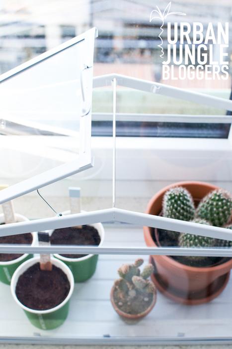 Happy Interior Blog: Urban Jungle Bloggers: Green Windowsill | Interior Design & Decoration | Scoop.it