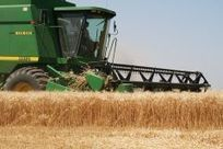 Argentina forecasted to increase wheat area by 25% for a 15/16 million tons crop | WHEAT | Scoop.it