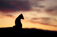 Greenland, WIldlife and Man Bound by Nature   All about nature   Scoop.it