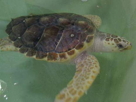 Rescue groups serve as first responders for beached sea animals | Animals R Us | Scoop.it