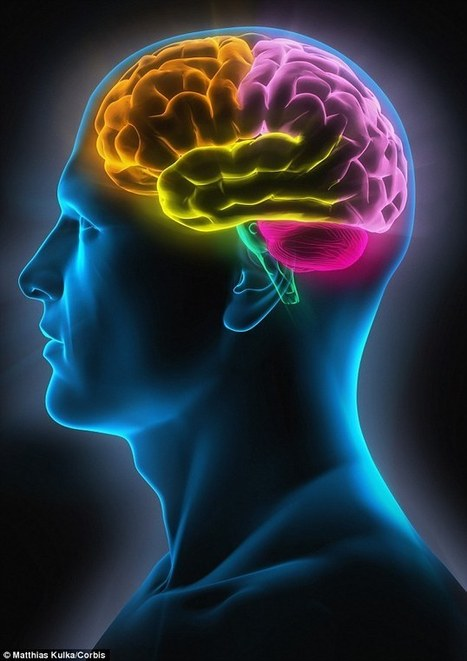 Female brains really ARE different to male minds | Kickin' Kickers | Scoop.it