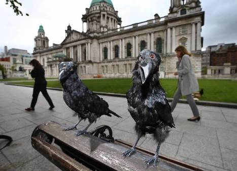 Game of Thrones: Why three-eyed ravens are flocking to Northern Ireland - Independent.ie | Destination Marketing Management | Scoop.it