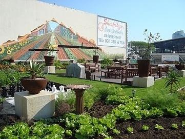 Les Energies de Madiana : Les toits verts, une mesure d'efficacité ...   Toiture terrasse végétalisée   Scoop.it
