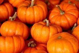 Pumpkins pack healthy punch - WWSB ABC 7   Cucurbitaceae   Scoop.it