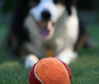 Match Your Dog's Breed Type to the Right Exercise   Pet News   Scoop.it
