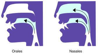 Voyelles nasales | Français facile French for Beginners | Remue-méninges FLE | Scoop.it