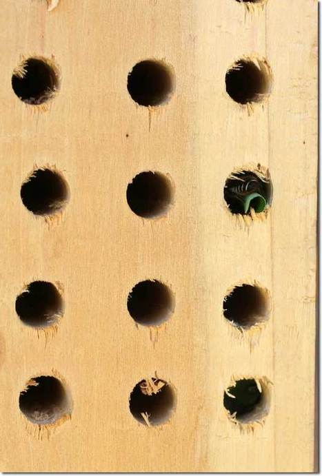 Let's Invite Leaf Cutter Bees into Our Gardens | Aquaponics & Permaculture | Scoop.it