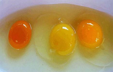 ΔΙΑΤΡΟΦΙΚΗ ΒΟΜΒΑ; ΠΡΟΣΟΧΗ με τα αυγά! | ΜΕΤΑ - ΤΕΧΝΟΛΟΓΙΑ | Scoop.it
