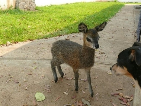 The Cutest Animal | Animals | Scoop.it