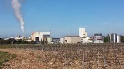 Valoriser les résidus de la fabrication du vin | Le Vin et + encore | Scoop.it