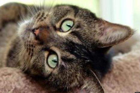 Saving Grace Rescue Helps Stray And Feral Kittens Beat Long Odds Against ... - Huffington Post   Cats   Scoop.it