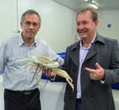 Sustainability is now crystal clear for deep sea crabs | Aquaculture Directory | Aquaculture Directory | Scoop.it