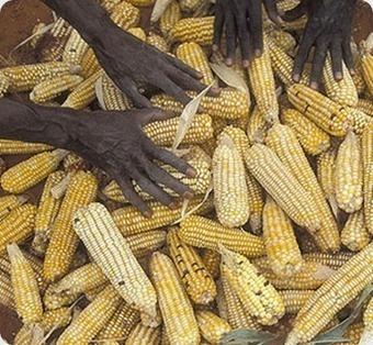 La crise alimentaire n'a jamais pris fin | Daraja.net | Scoop.it
