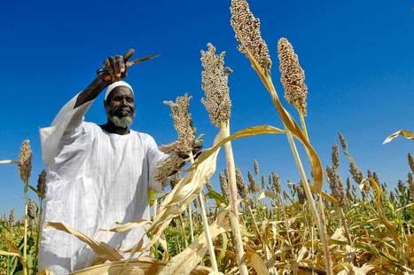 La FAO décide d'éradiquer la faim et la malnutrition dans le monde | Macrophone | Scoop.it