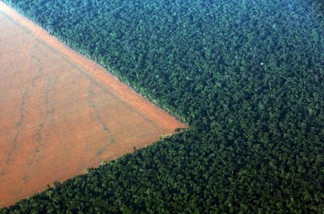 Photo impressionnante : Déforestation en Amazonie | 694028 | Scoop.it
